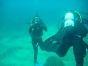 Cool Diver