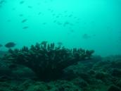 More fish... More coral