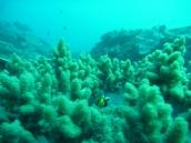 Fish + Coral